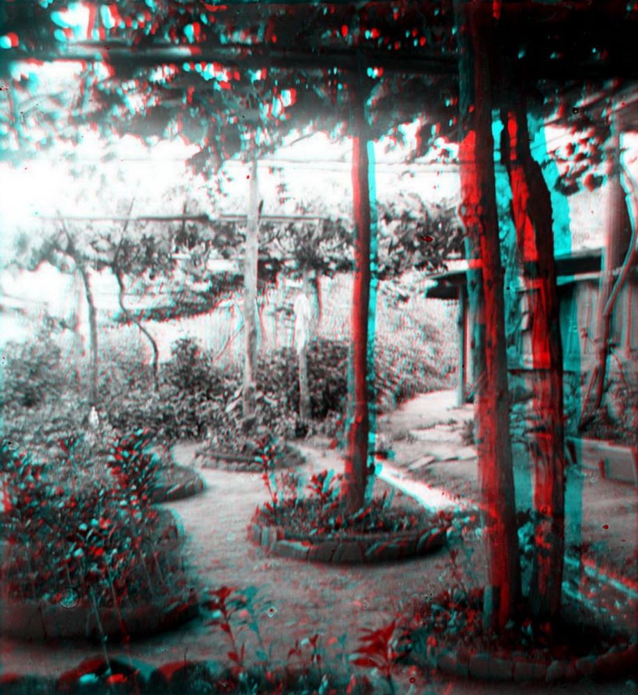 Стерео - парк, деревья
