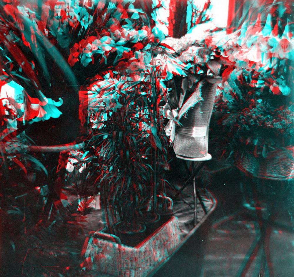 Стерео - зимний сад (оранжерея)